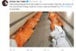 ممرضة امريكية تكشف عن تكدس جثث ضحايا الكورونا في شاحنات تمهيدا لدورها في الدفن في مقابر ولاية نينيورك