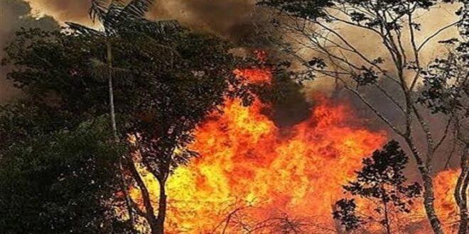 اوامر للجيش البرازيلي للمشاركة في اطفاء حرائق غابات الامازون بعد اندلاع نحو 2500 حريق خلال اليومين الماضيين