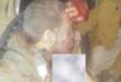 """طيارا """" مقاتلة التورنيدو """" سقطا بيد انصار الله الحوثيين اسرى بعد اسقاط مقاتلتهما في الجوف"""